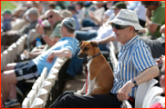 A canine crowd-member during the match v Yorkshire